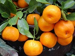 Lip Balm with Tangerine Essential Oil