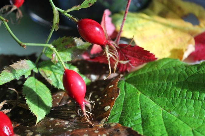 Rosehip oil boosts collagen production
