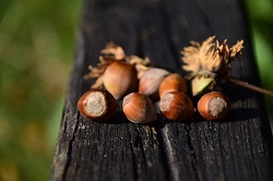 Hazelnuts give hazelnut oil – great natural ingredient for DIY body butter or homemade body lotion.